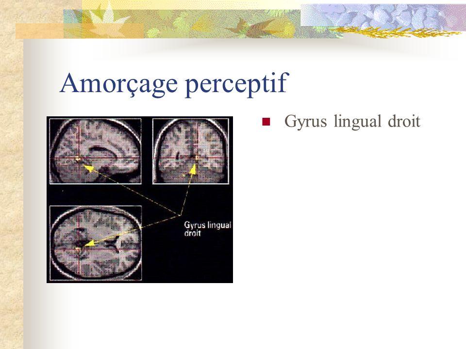 Amorçage perceptif Gyrus lingual droit