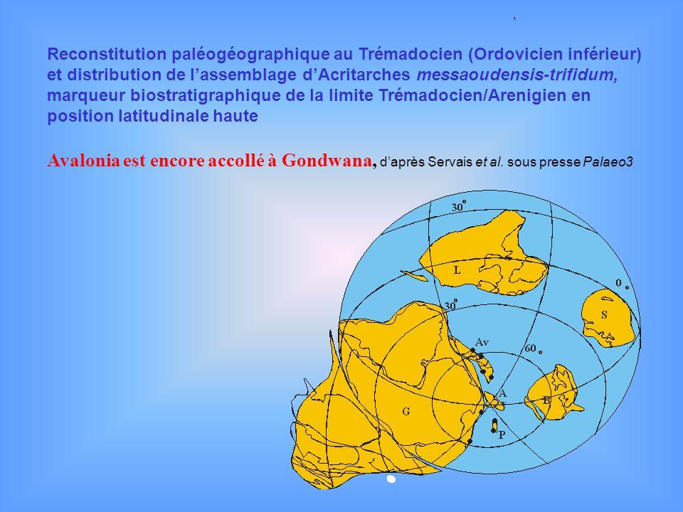 Reconstitution paléogéographique au Trémadocien (Ordovicien inférieur) et distribution de lassemblage dAcritarches messaoudensis-trifidum, marqueur bi