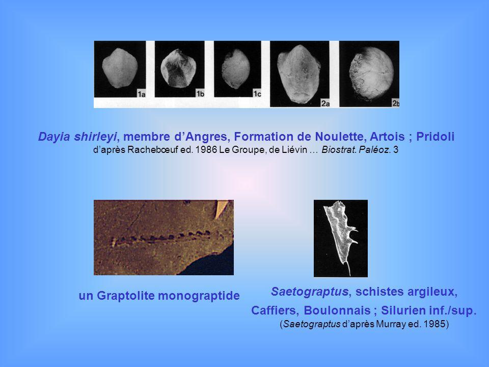 Dayia shirleyi, membre dAngres, Formation de Noulette, Artois ; Pridoli daprès Rachebœuf ed. 1986 Le Groupe, de Liévin … Biostrat. Paléoz. 3 un Grapto