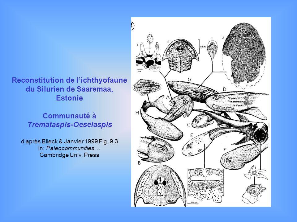 Reconstitution de lichthyofaune du Silurien de Saaremaa, Estonie Communauté à Tremataspis-Oeselaspis daprès Blieck & Janvier 1999 Fig. 9.3 In: Paleoco