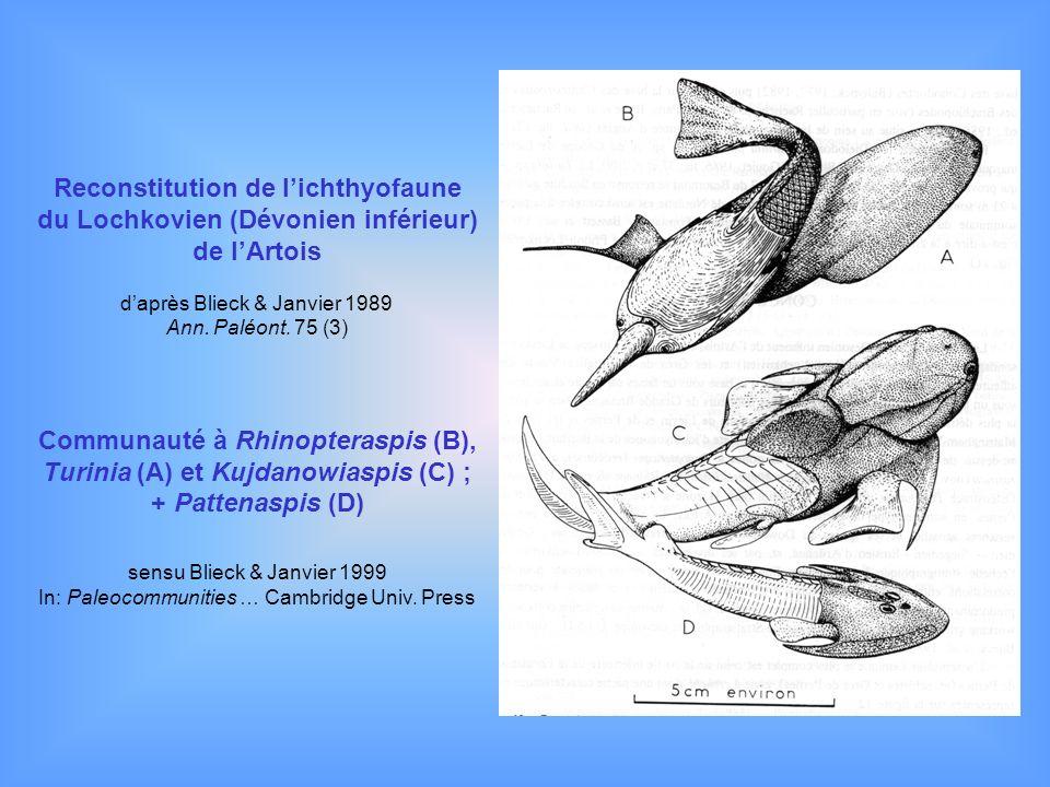 Reconstitution de lichthyofaune du Lochkovien (Dévonien inférieur) de lArtois daprès Blieck & Janvier 1989 Ann. Paléont. 75 (3) Communauté à Rhinopter