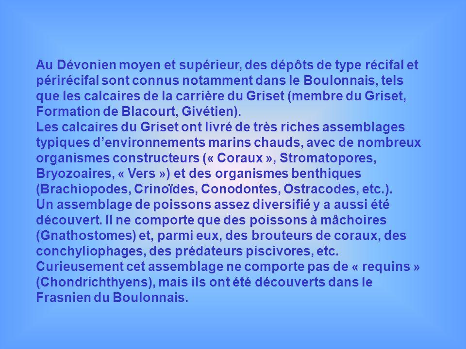 Au Dévonien moyen et supérieur, des dépôts de type récifal et périrécifal sont connus notamment dans le Boulonnais, tels que les calcaires de la carri