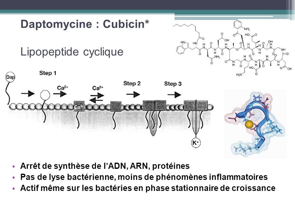 Daptomycine : Cubicin* Lipopeptide cyclique Arrêt de synthèse de lADN, ARN, protéines Pas de lyse bactérienne, moins de phénomènes inflammatoires Acti