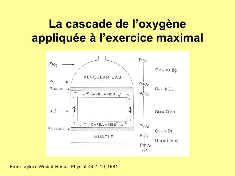 La cascade de loxygène appliquée à lexercice maximal From Taylor e Weibel, Respir. Physiol. 44, 1-10, 1981
