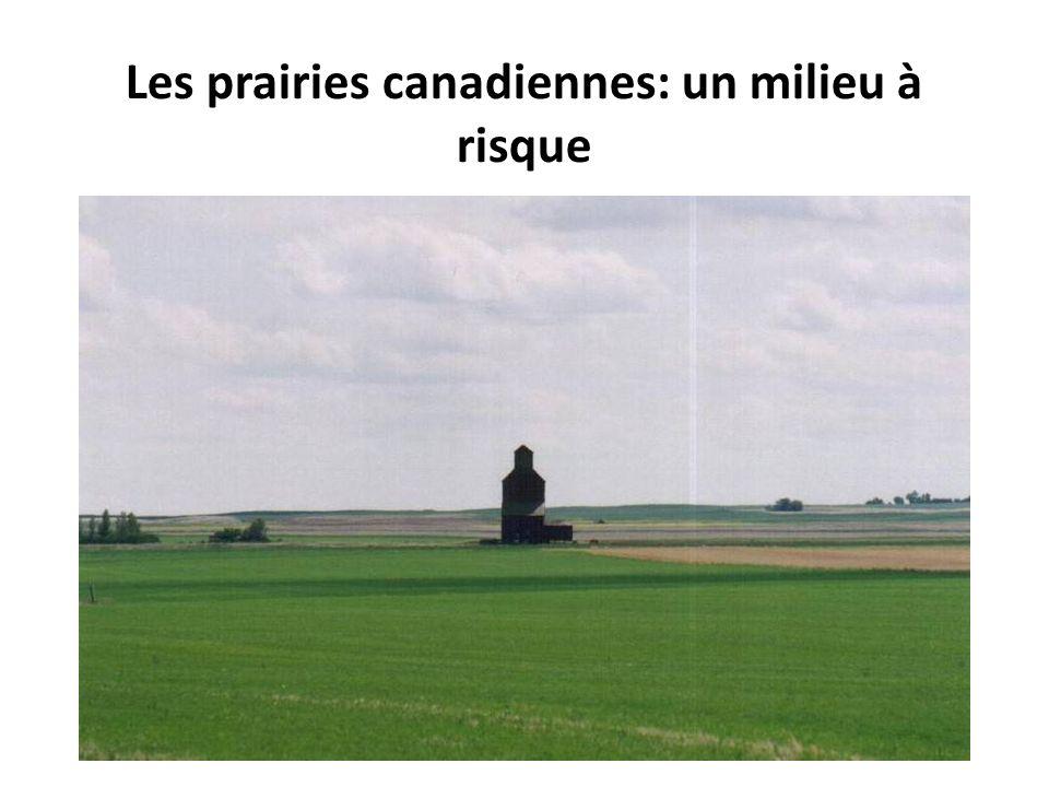 Les prairies canadiennes: un milieu à risque