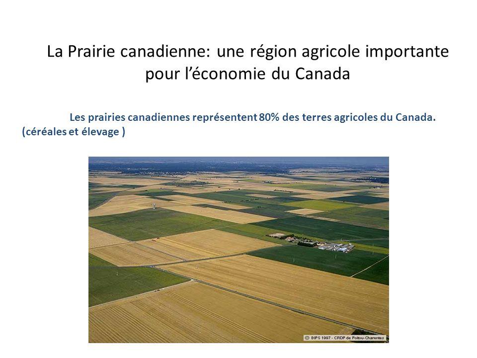 Les prairies canadiennes représentent 80% des terres agricoles du Canada. (céréales et élevage ) La Prairie canadienne: une région agricole importante
