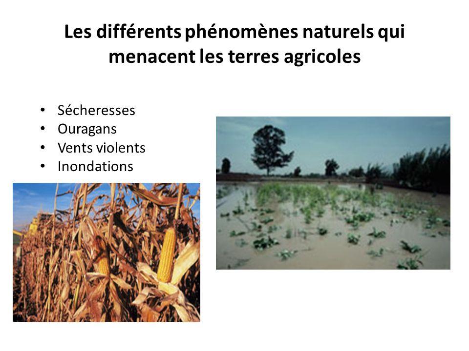 Les différents phénomènes naturels qui menacent les terres agricoles Sécheresses Ouragans Vents violents Inondations