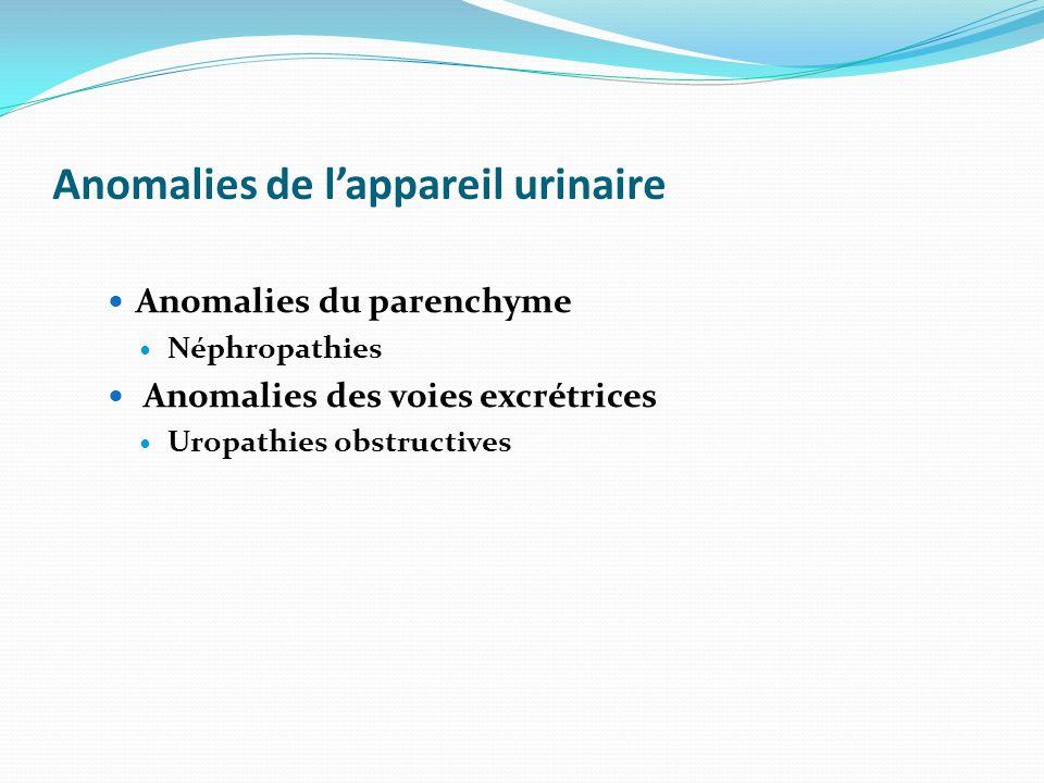 Anomalies de lappareil urinaire Anomalies du parenchyme Néphropathies Anomalies des voies excrétrices Uropathies obstructives
