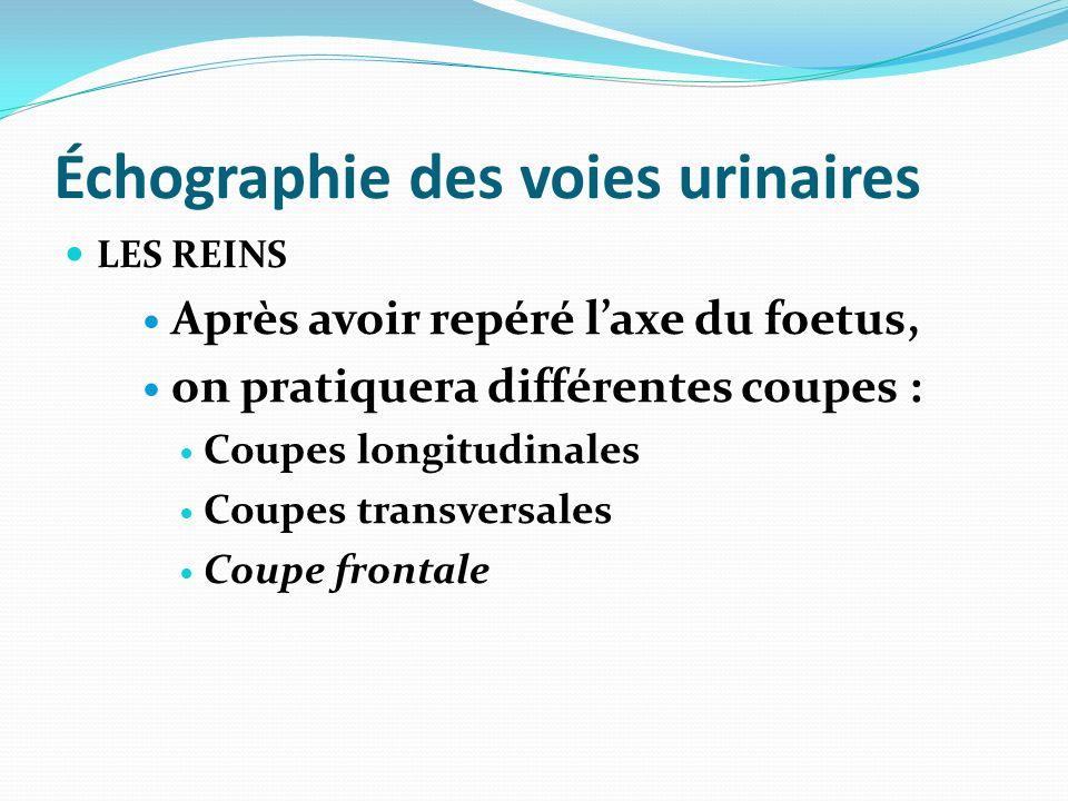 Échographie des voies urinaires LES REINS Après avoir repéré laxe du foetus, on pratiquera différentes coupes : Coupes longitudinales Coupes transvers