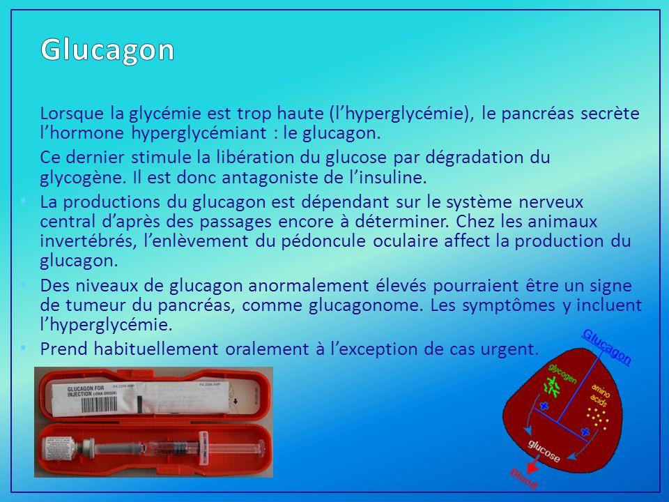 Lorsque la glycémie est trop haute (lhyperglycémie), le pancréas secrète lhormone hyperglycémiant : le glucagon.