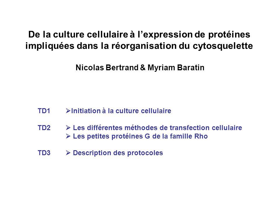 De la culture cellulaire à lexpression de protéines impliquées dans la réorganisation du cytosquelette Nicolas Bertrand & Myriam Baratin TD1 Initiation à la culture cellulaire TD2 Les différentes méthodes de transfection cellulaire Les petites protéines G de la famille Rho TD3 Description des protocoles