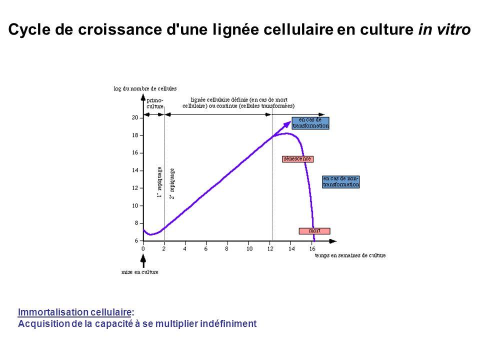 Cycle de croissance d une lignée cellulaire en culture in vitro Immortalisation cellulaire: Acquisition de la capacité à se multiplier indéfiniment