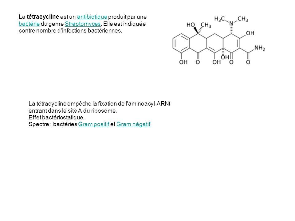 La tétracycline est un antibiotique produit par une bactérie du genre Streptomyces. Elle est indiquée contre nombre d'infections bactériennes.antibiot