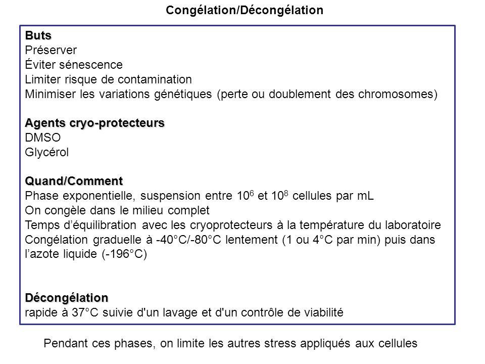 Congélation/DécongélationButs Préserver Éviter sénescence Limiter risque de contamination Minimiser les variations génétiques (perte ou doublement des chromosomes) Agents cryo-protecteurs DMSO GlycérolQuand/Comment Phase exponentielle, suspension entre 10 6 et 10 8 cellules par mL On congèle dans le milieu complet Temps déquilibration avec les cryoprotecteurs à la température du laboratoire Congélation graduelle à -40°C/-80°C lentement (1 ou 4°C par min) puis dans lazote liquide (-196°C)Décongélation rapide à 37°C suivie d un lavage et d un contrôle de viabilité Pendant ces phases, on limite les autres stress appliqués aux cellules