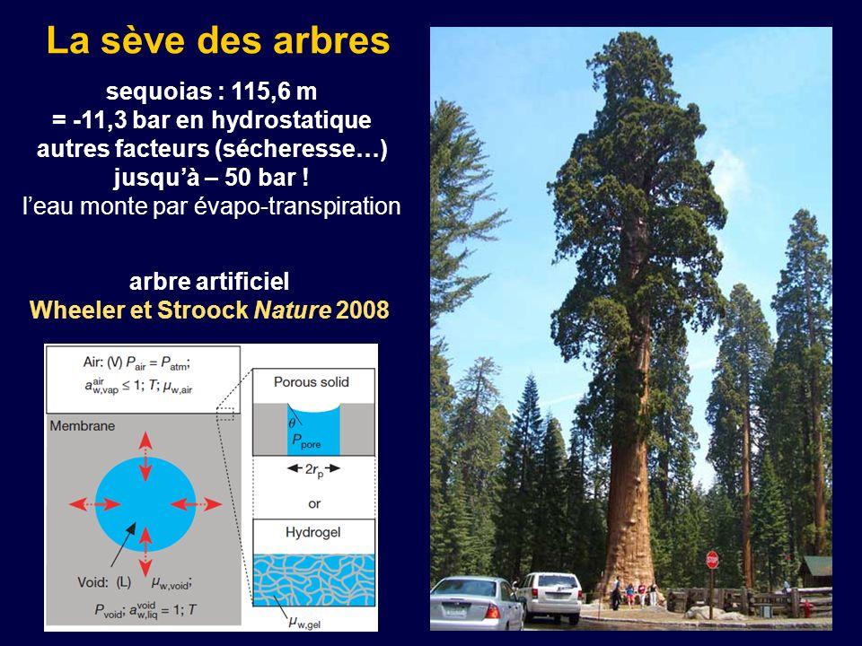 La sève des arbres sequoias : 115,6 m = -11,3 bar en hydrostatique autres facteurs (sécheresse…) jusquà – 50 bar ! leau monte par évapo-transpiration