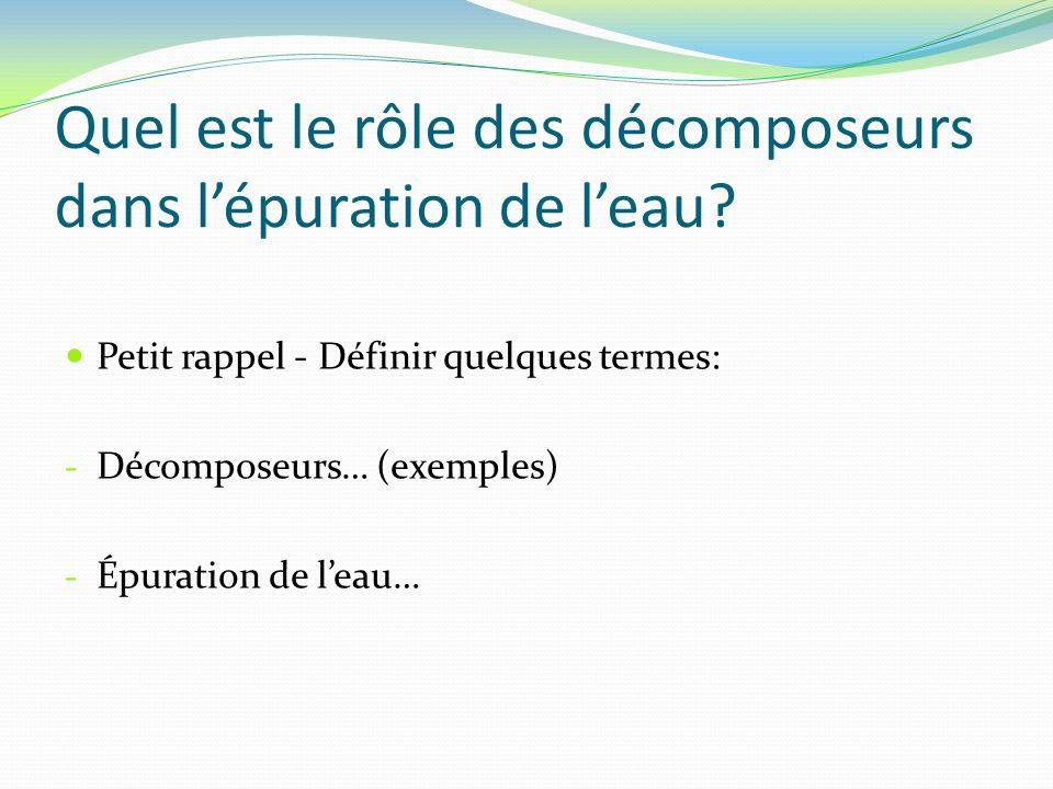 Quel est le rôle des décomposeurs dans lépuration de leau? Petit rappel - Définir quelques termes: - Décomposeurs… (exemples) - Épuration de leau…