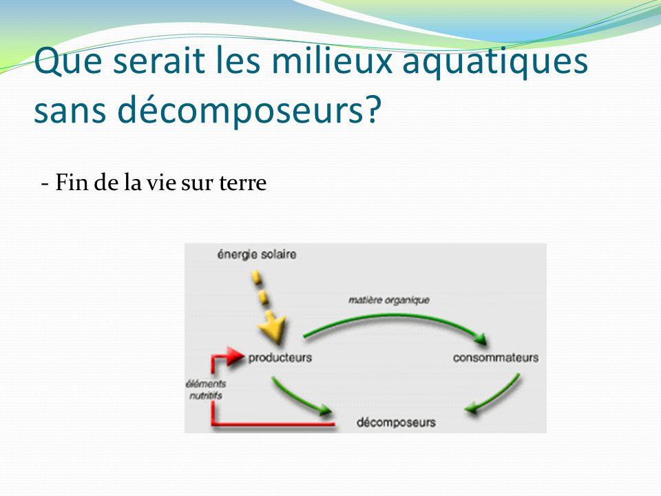 Que serait les milieux aquatiques sans décomposeurs? - Fin de la vie sur terre