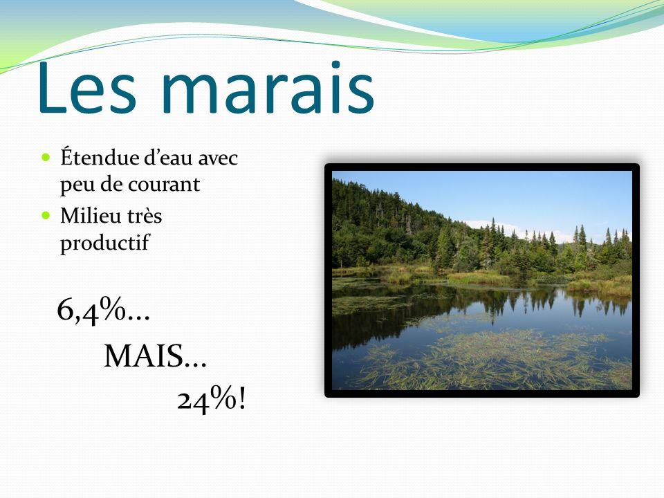 Les marais Étendue deau avec peu de courant Milieu très productif 6,4%... 24%! MAIS...