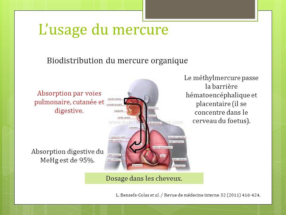 Lusage du mercure Biodistribution du mercure organique Absorption par voies pulmonaire, cutanée et digestive. Le méthylmercure passe la barrière hémat