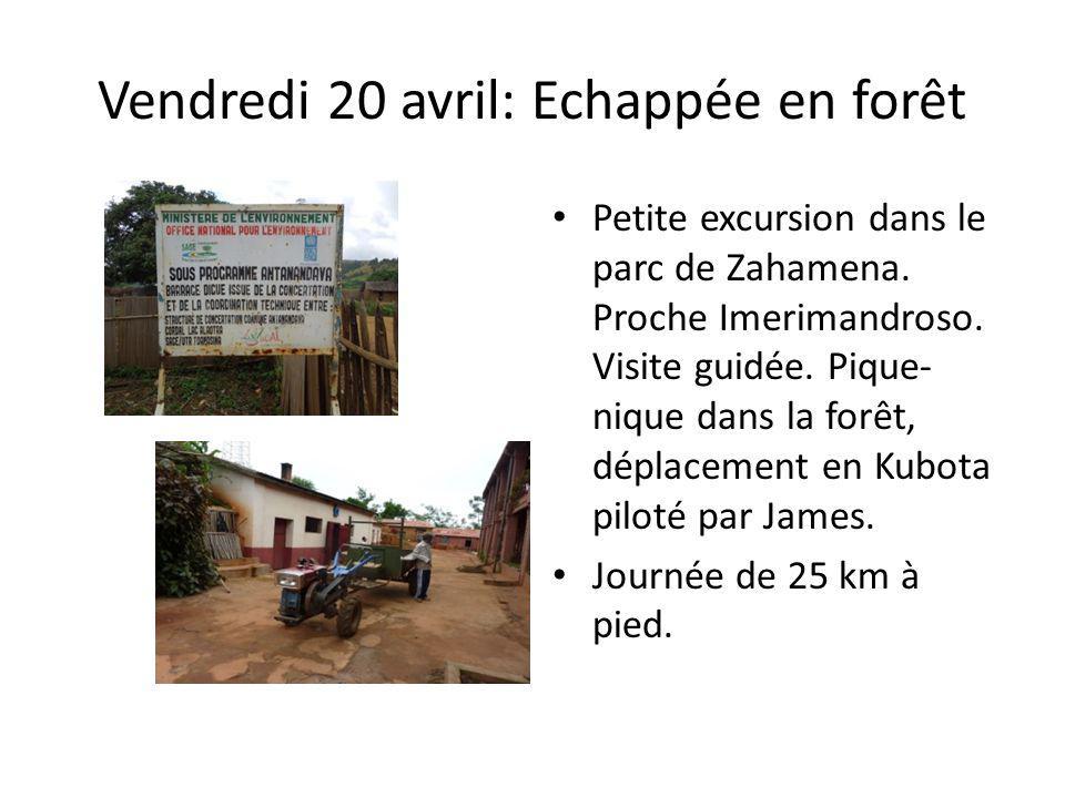 Vendredi 20 avril: Echappée en forêt Petite excursion dans le parc de Zahamena. Proche Imerimandroso. Visite guidée. Pique- nique dans la forêt, dépla