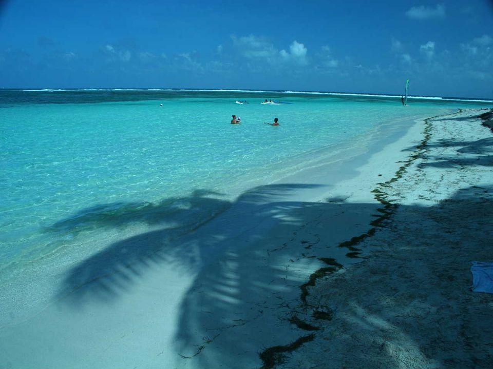 La Guadeloupe était autrefois très riche en biodiversité, en paysages à forte naturalité et en espèces endémiques.