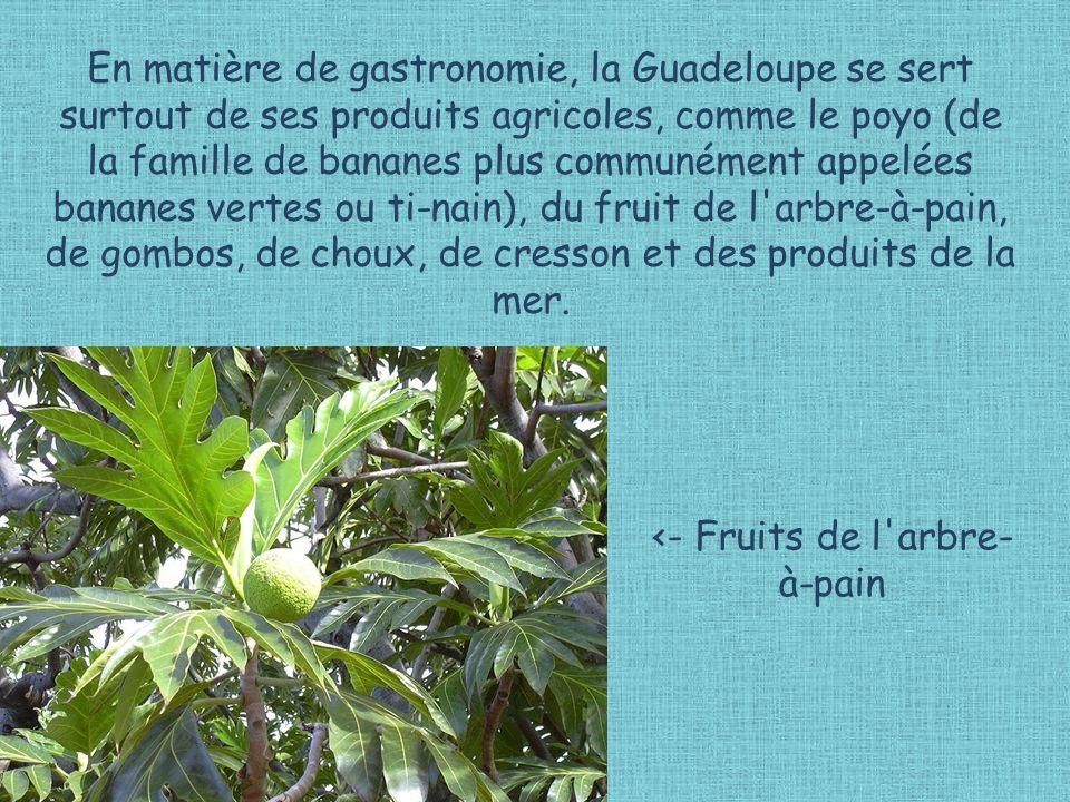 En matière de gastronomie, la Guadeloupe se sert surtout de ses produits agricoles, comme le poyo (de la famille de bananes plus communément appelées bananes vertes ou ti-nain), du fruit de l arbre-à-pain, de gombos, de choux, de cresson et des produits de la mer.