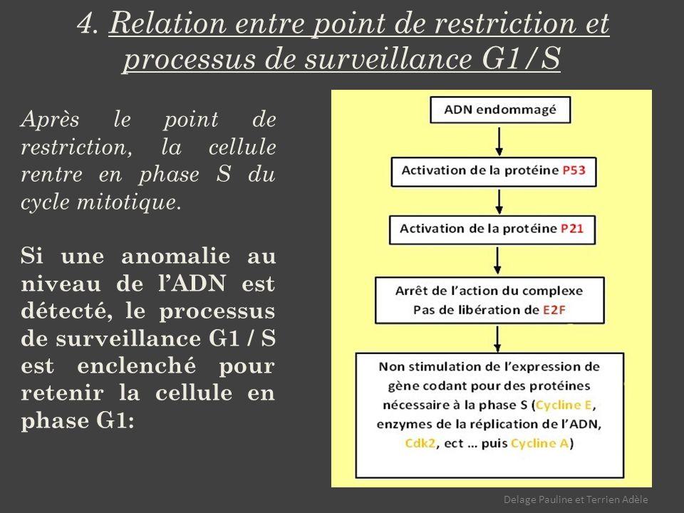 4. Relation entre point de restriction et processus de surveillance G1/S Après le point de restriction, la cellule rentre en phase S du cycle mitotiqu
