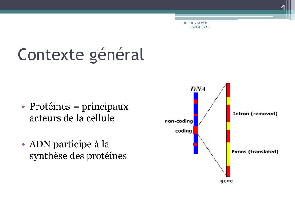 Contexte général 4 DUPOUY Maylis - ENSIMAG 2A Protéines = principaux acteurs de la cellule ADN participe à la synthèse des protéines