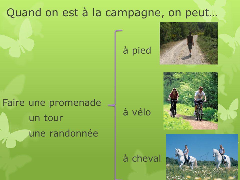 Quand on est à la campagne, on peut… Faire une promenade un tour une randonnée à pied à vélo à cheval