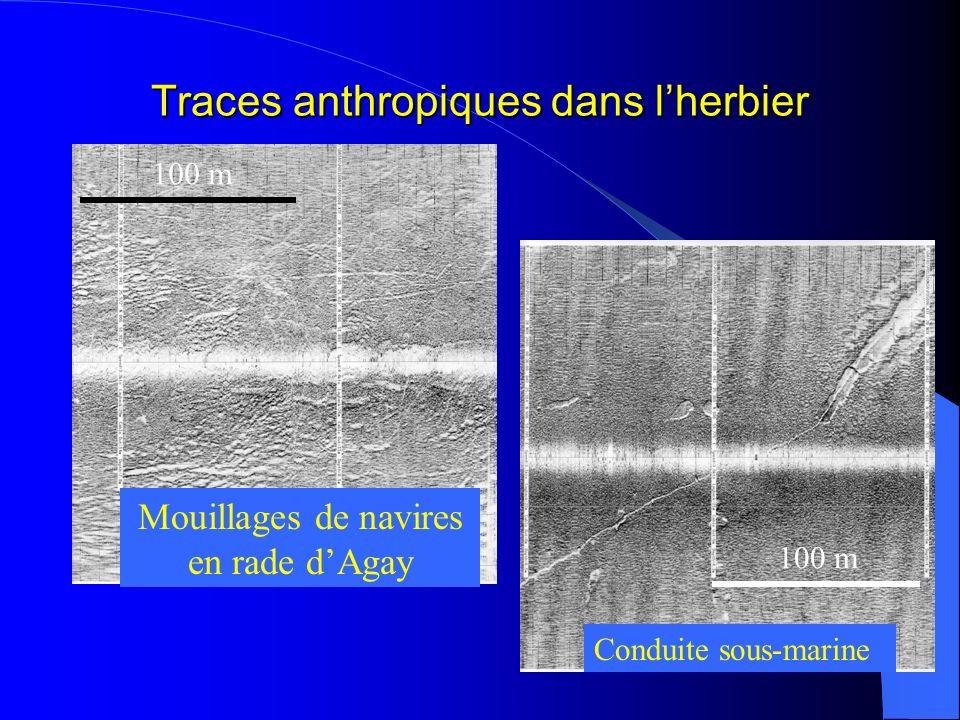Traces anthropiques dans lherbier Mouillages de navires en rade dAgay Conduite sous-marine 100 m