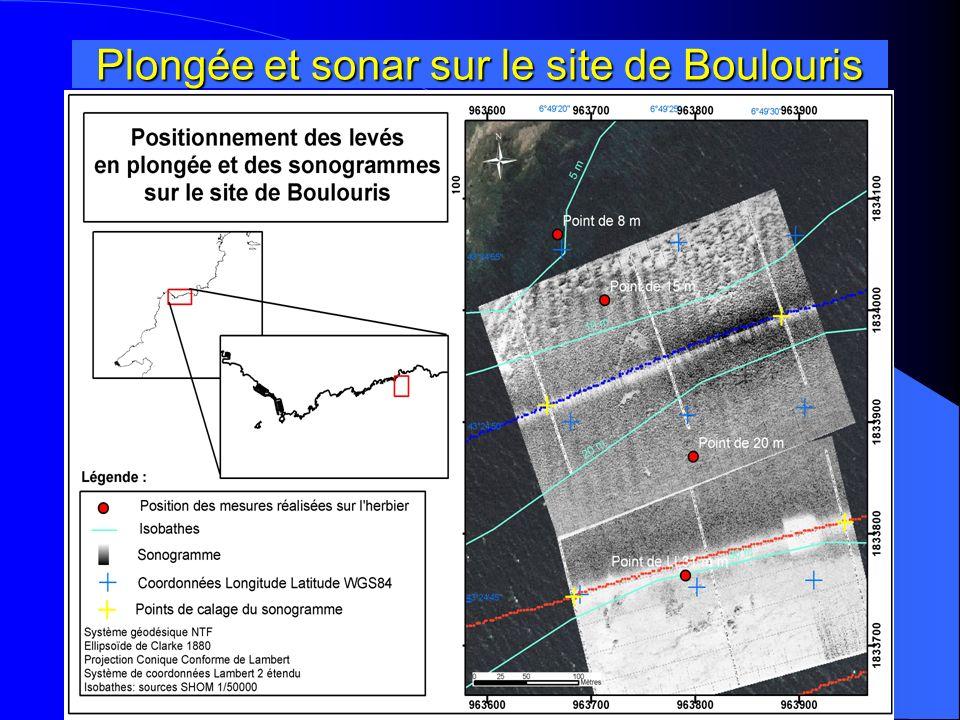Boulouris : Limite inférieure dherbier Herbier à Faciès continu Limite inférieure Point de plongée 31 m Petits pointements rocheux Sédiment fin .