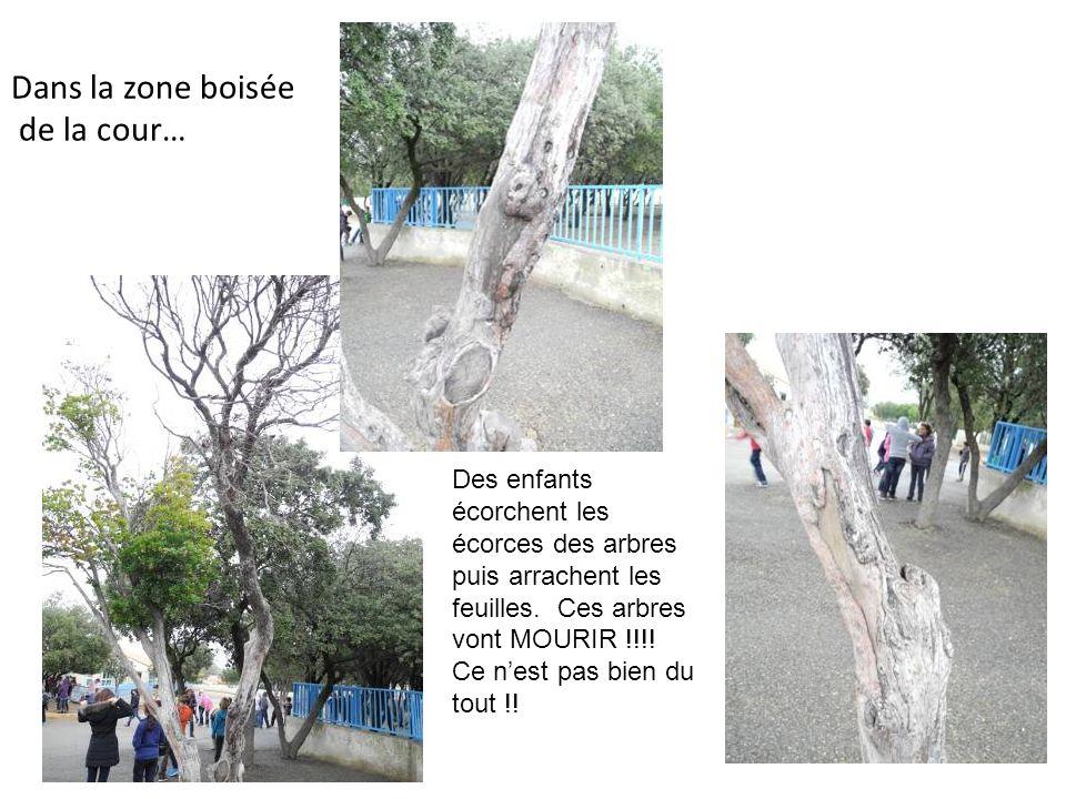 Dans la zone boisée de la cour… Des enfants écorchent les écorces des arbres puis arrachent les feuilles.