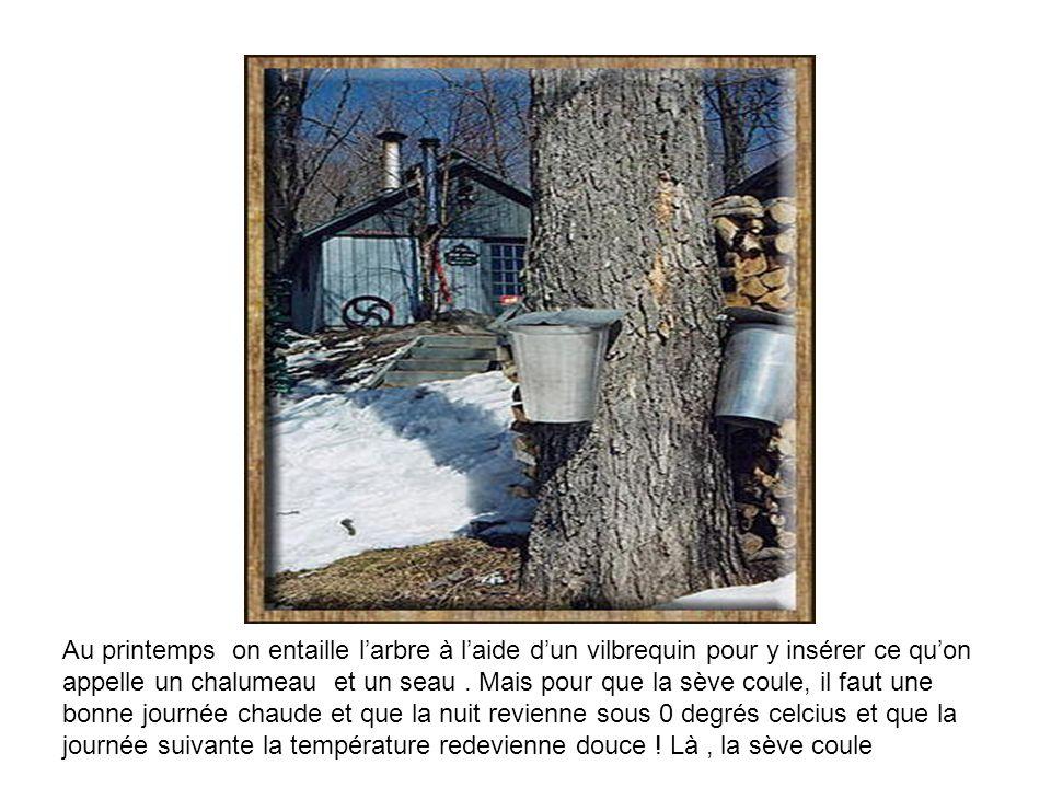 Le vilbrequin Le chalumeau Le seau Note : Il faut récolter environ 40 litres deau dérable pour fabriquer 1 seul litre de sirop dérable …
