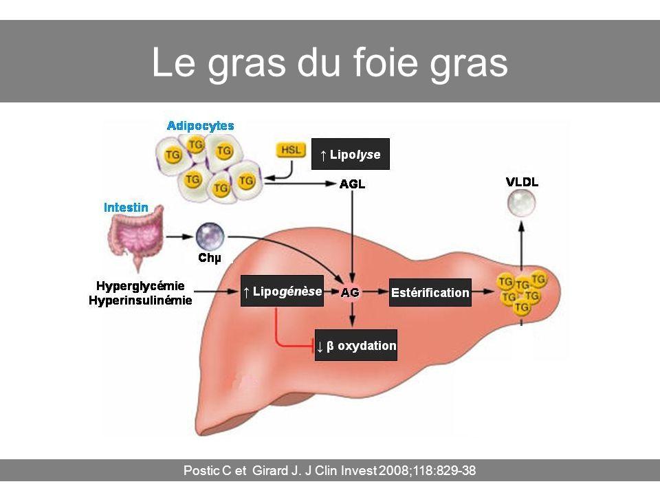 Postic C et Girard J. J Clin Invest 2008;118:829-38 Le gras du foie gras