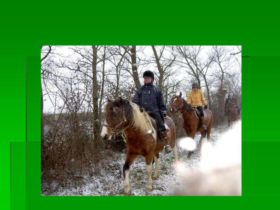 Cavaliers de la Garrelière. Cavaliers de la Garrelière. Les photos qui suivent sont de certains cavaliers et cavalières de la ferme pédagogique de la