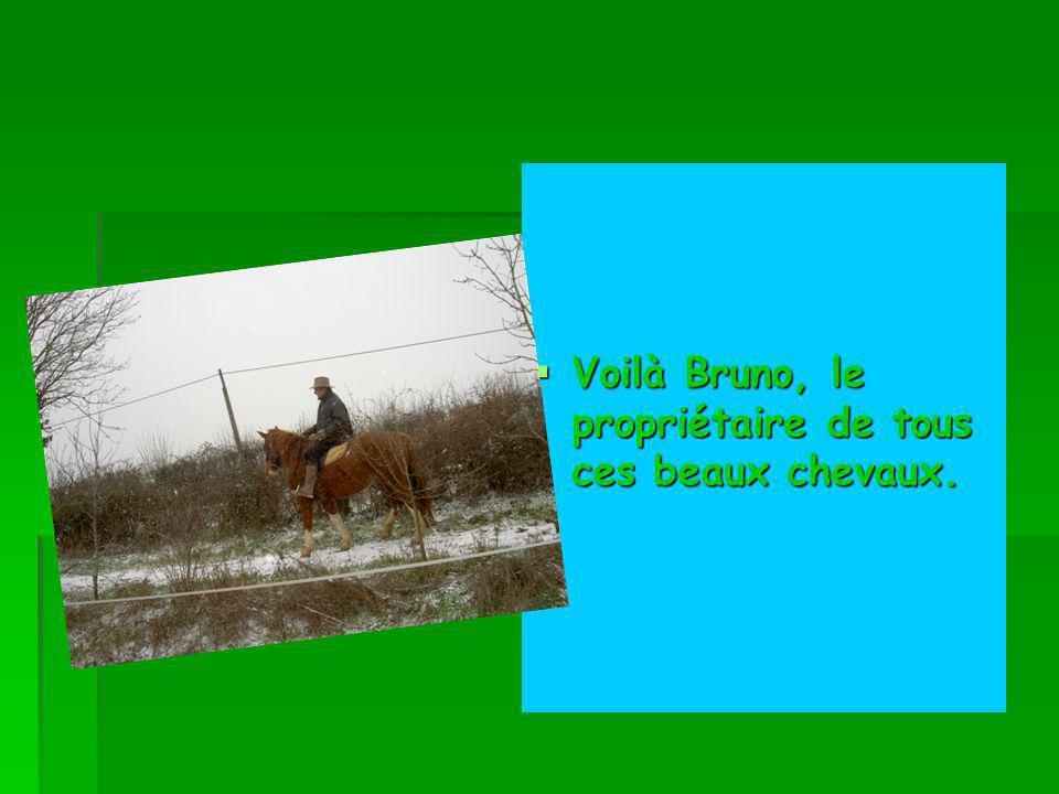Voilà Bruno, le propriétaire de tous ces beaux chevaux.