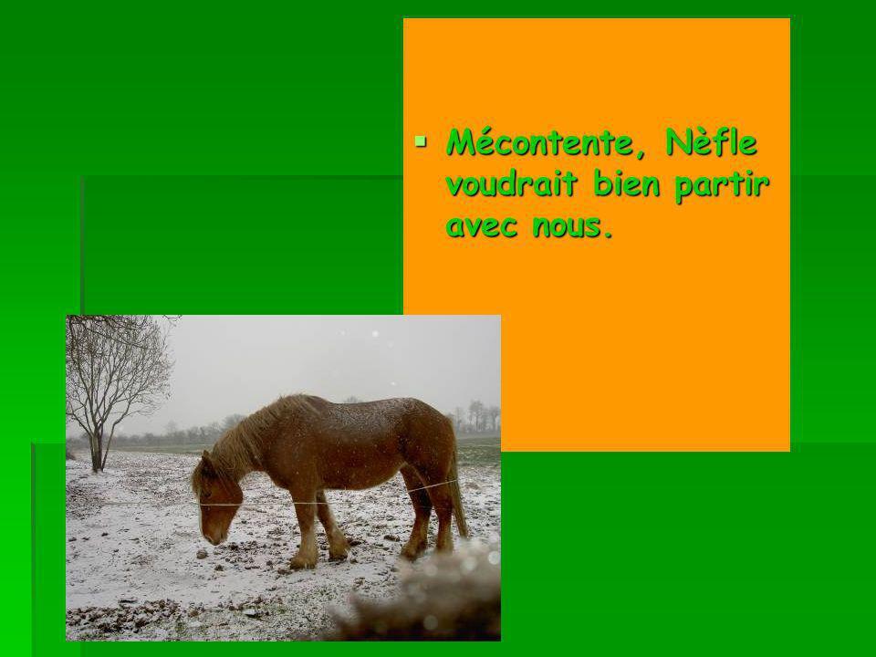 Mécontente, Nèfle voudrait bien partir avec nous. Mécontente, Nèfle voudrait bien partir avec nous.