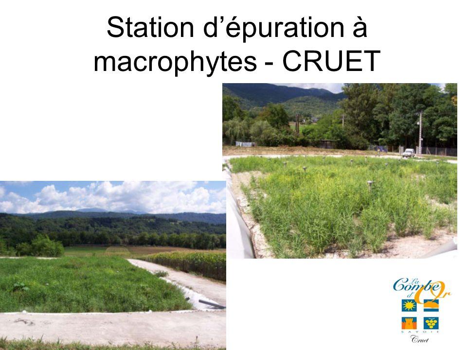 Station dépuration à macrophytes - CRUET