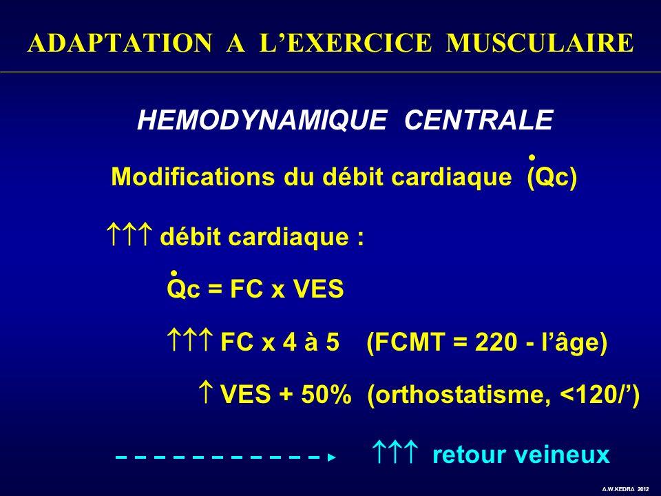 ADAPTATION A LEXERCICE MUSCULAIRE HEMODYNAMIQUE CENTRALE Modifications du débit cardiaque (Qc) débit cardiaque : Qc = FC x VES FC x 4 à 5 (FCMT = 220