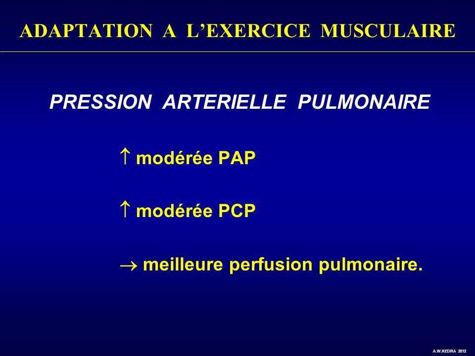 ADAPTATION A LEXERCICE MUSCULAIRE PRESSION ARTERIELLE PULMONAIRE modérée PAP modérée PCP meilleure perfusion pulmonaire. A.W.KEDRA 2012
