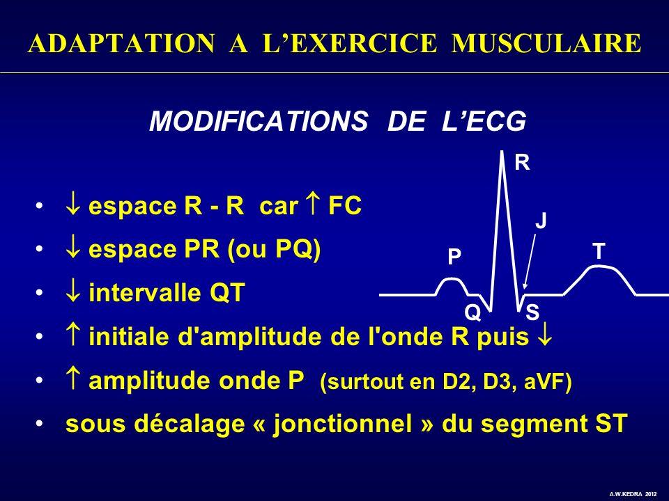 ADAPTATION A LEXERCICE MUSCULAIRE MODIFICATIONS DE LECG espace R - R car FC espace PR (ou PQ) intervalle QT initiale d'amplitude de l'onde R puis ampl