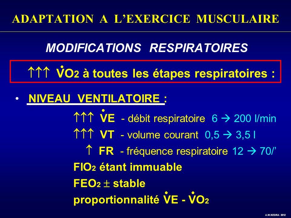 ADAPTATION A LEXERCICE MUSCULAIRE MODIFICATIONS RESPIRATOIRES VO 2 à toutes les étapes respiratoires : NIVEAU VENTILATOIRE : VE - débit respiratoire 6