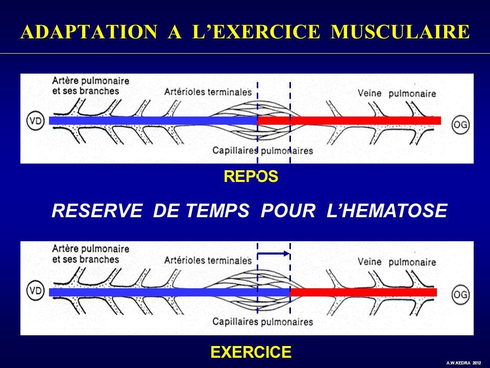 ADAPTATION A LEXERCICE MUSCULAIRE REPOS EXERCICE RESERVE DE TEMPS POUR LHEMATOSE A.W.KEDRA 2012