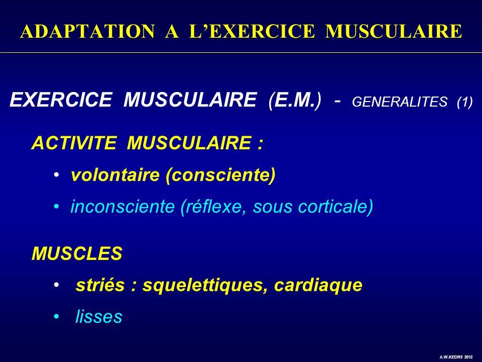 ADAPTATION A LEXERCICE MUSCULAIRE EXERCICE MUSCULAIRE (E.M.) - GENERALITES (1) ACTIVITE MUSCULAIRE : volontaire (consciente) inconsciente (réflexe, so
