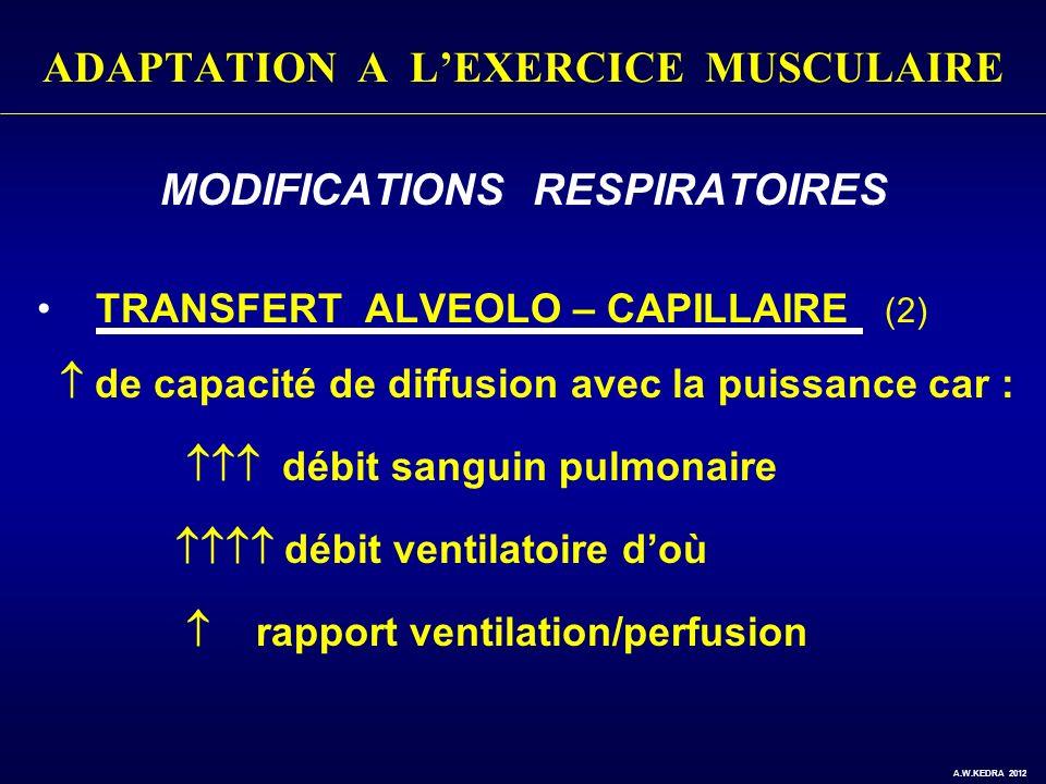 ADAPTATION A LEXERCICE MUSCULAIRE MODIFICATIONS RESPIRATOIRES TRANSFERT ALVEOLO – CAPILLAIRE (2) de capacité de diffusion avec la puissance car : débi