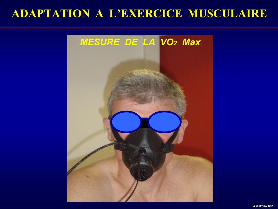 MESURE DE LA VO 2 Max A.W. KEDRA 2010 ADAPTATION A LEXERCICE MUSCULAIRE A.W.KEDRA 2012