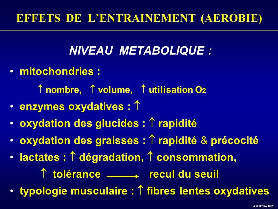 EFFETS DE LENTRAINEMENT (AEROBIE) NIVEAU METABOLIQUE : mitochondries : nombre, volume, utilisation O 2 enzymes oxydatives : oxydation des glucides : r