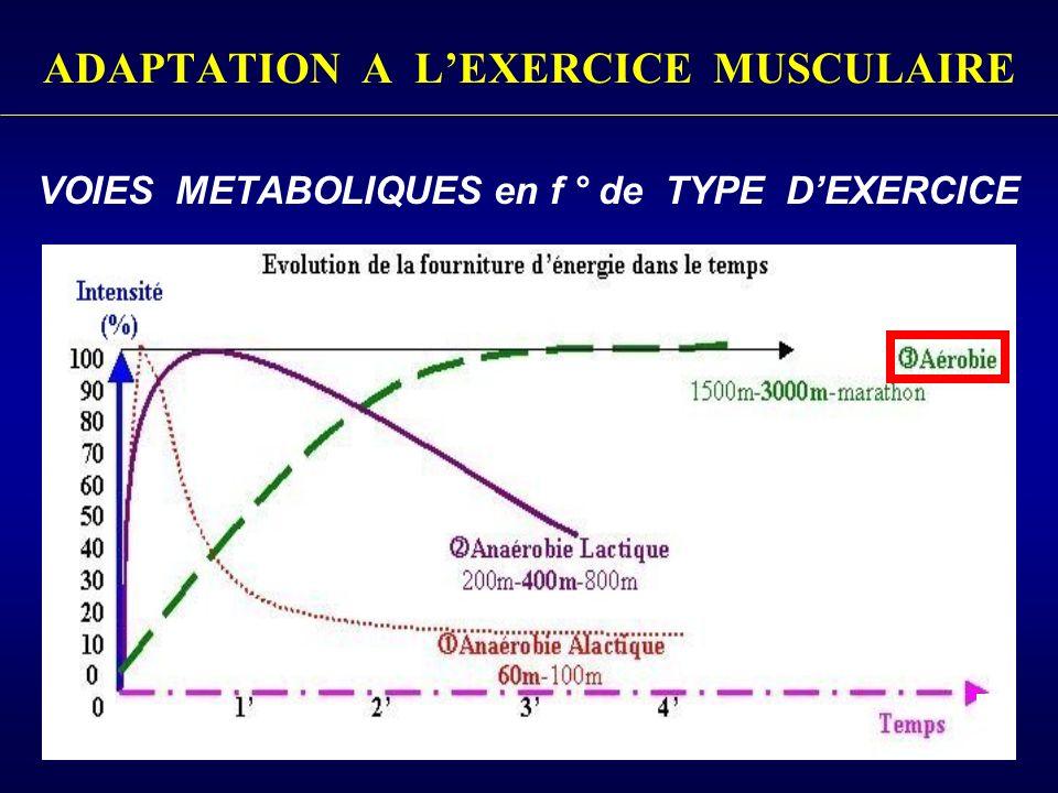 ADAPTATION A LEXERCICE MUSCULAIRE VOIES METABOLIQUES en f ° de TYPE DEXERCICE