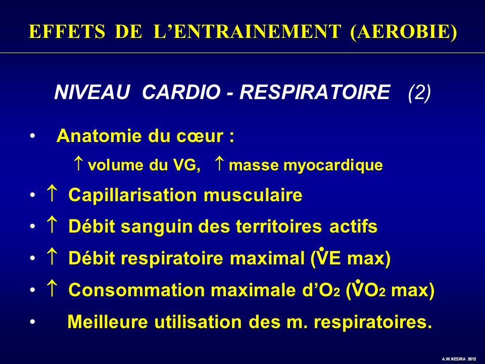 EFFETS DE LENTRAINEMENT (AEROBIE) NIVEAU CARDIO - RESPIRATOIRE (2) Anatomie du cœur : volume du VG, masse myocardique Capillarisation musculaire Débit