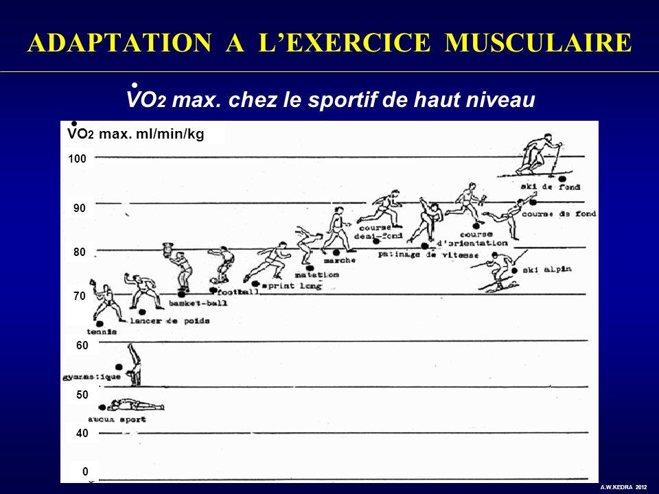 ADAPTATION A LEXERCICE MUSCULAIRE VO 2 max. ml/min/kg VO 2 max. chez le sportif de haut niveau 100 90 80 70 60 50 40 0 A.W.KEDRA 2012